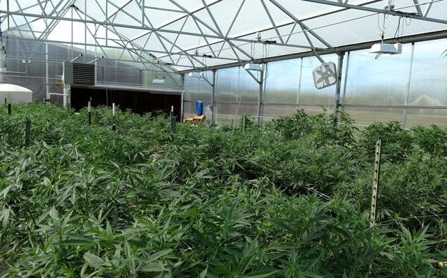 43 cbd natural farming