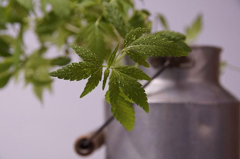 hemp seed oil uses